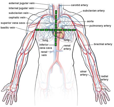 upper-body-circulation2