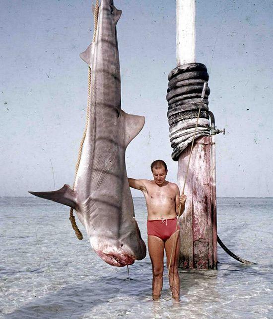 badass shark bang stick