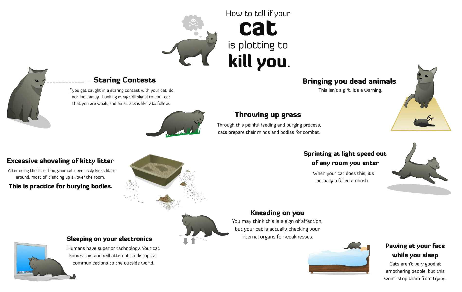 how-to-tell-if-your-cat-is-plotting-to-kill-you