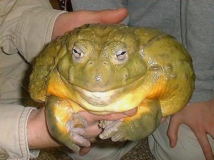 Nuke it toad