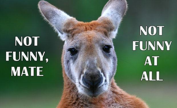 not funny kangaroo