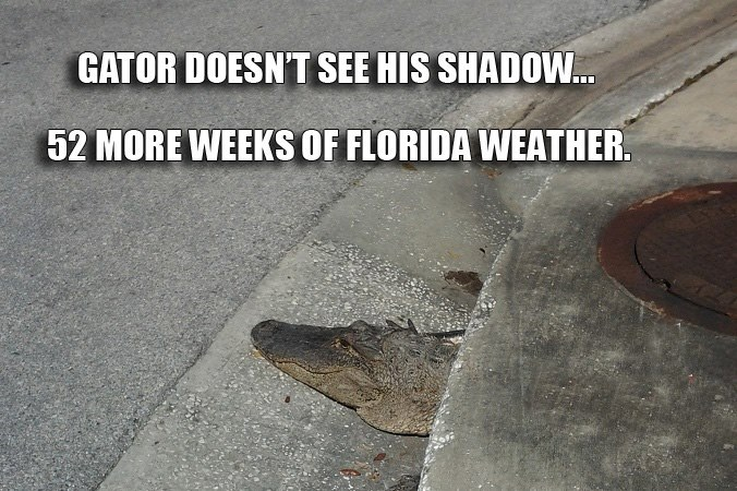 gator winter