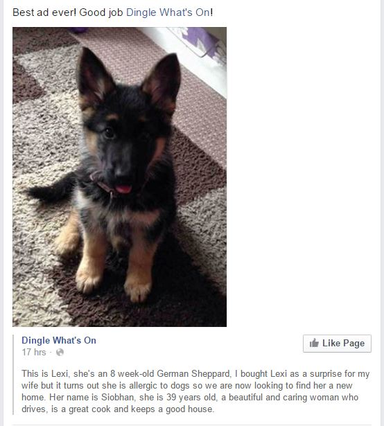 german shep ad