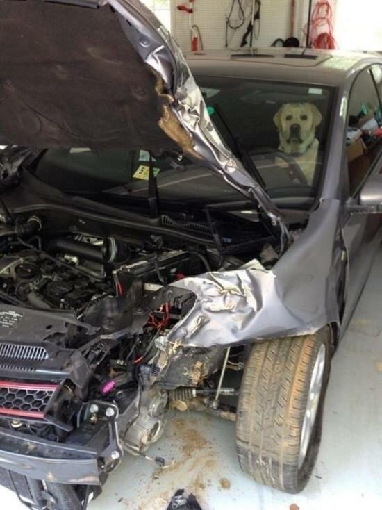 dog-accident
