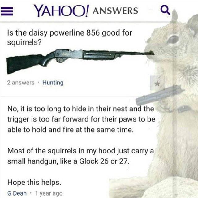 gun squirrels