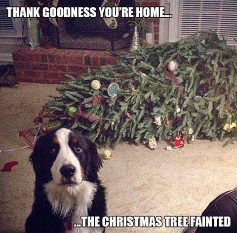 tree-fainted